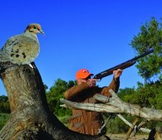 A DIY dove decoy. Photo by Jerry Neal (CPW).