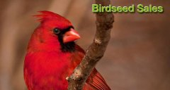 Friends of the Wildlife Sanctuary Birdseed Sales