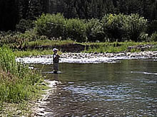 Montana fly fishing without Montana fishing guides