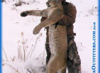 mountain lion hunting in Colorado