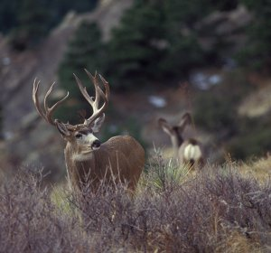 Best Mule Deer Hunting