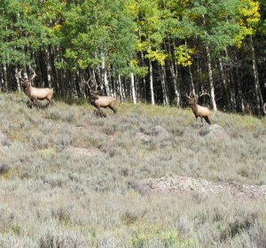 Cheap Elk hunts in Colorado