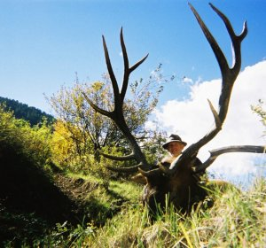 Colorado archery Elk hunting Outfitters