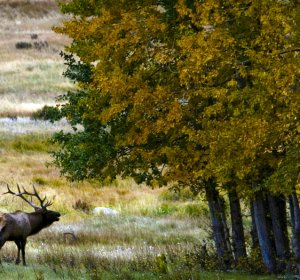 Colorado Division of Wildlife Elk hunting
