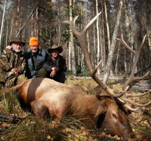 Elk hunting license in Colorado