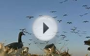 2011-2012 Goose Season Trailer