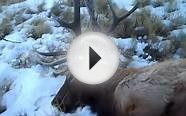 4th Season Colorado elk hunt video
