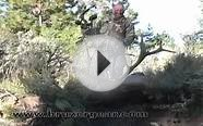 2008 Bruzer Gear and Atkinson Expeditions Elk Hunting Video