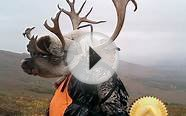 Alaska Unguided Caribou Hunts for Barren Ground Caribou
