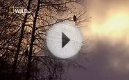 American Bald Eagle Hunting Attack [Nature Wildlife
