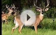 an Outfitter w/ Colorado Elk Hunting, Whitetail Hunts