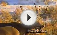 Best Trophy Mule Deer Hunting Anywhere