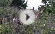 Bowhunting A 200-Inch Mule Deer Buck In New Mexico
