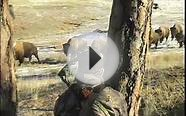 Buffalo HUnting Guides, Buffalo Hunting Outfitters, Elk Hunt