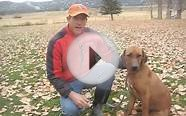 Carbondale Colorado Dog Trainer Rhodesian Ridgeback