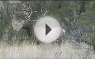 Central Oregon Private Land Elk