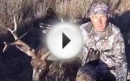 Colorado Archery Mule Deer Spot & Stalk hunt getting close