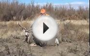 Colorado Eastern Plains Mule Deer Hunt