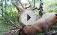 Colorado Elk Hunting at a World Class Elk Hunting Lodge