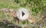 Colorado Fly Fishing - Brown Trout and Unexpected Guests