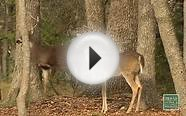 Deer Hunting Forecast 2015 - Texas Parks and Wildlife