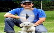 dog training colorado dog training utah