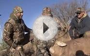 Droptine buck & Muledeer hunt