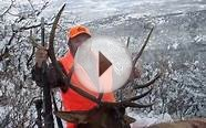 Elk Hunting, Amazing Colorado Elk and Deer Hunt