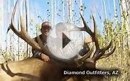 Elk Hunting Guides & Outfitters | World Class Outdoors