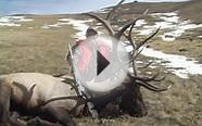 Elk Hunting Wyoming