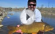 Fly Fishing for Spring Colorado Carp | Carp Fly Fishing