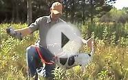 Free Hunting Dog Training Videos - Willow Creek Kennels