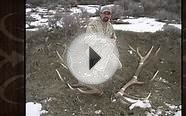 How To Score An Elk Using The Boone & Crockett System