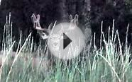 Huge 4x4 Mule Deer with Cool Eye Guards Hit List Buck 2012