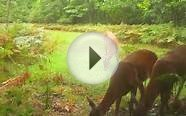 Hunting Property for Sale, Large Whitetail Doe and Buck