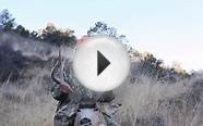 Hunting Rutting Bucks: Colorado Mule Deer Hunt 2014 AWESOME!