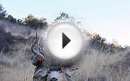 Hunting the Rut: Colorado Mule Deer Hunt 2014
