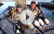 King Eider hunting Outfitters in Alaska - Aleutian Island