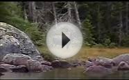 Moose Hunting Outfitters | Spruce Pond - Moose Caribou