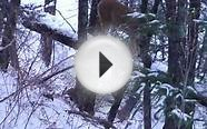 Mountain Lion Hunting Close Call