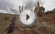 Mule Deer Hunting in Wyoming