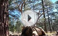 New Mexico Elk Hunting Outfitter with Landowner Tags