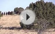 NM Cow Elk Hunt Horn Reaper Outfitters