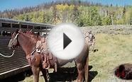 Pack Horses For Elk Hunting
