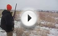 Pheasant Hunt Late Season at Colorado Hunting Ranch