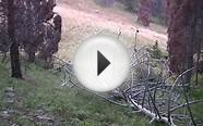 Rocky Mountain Meat Hunter - Colorado Elk Archery Hunting