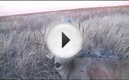 Spot & Stalk Mule Deer Bow hunt in Colorado