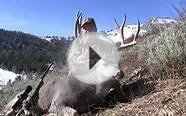 Three Great Nevada Mule Deer Hunts - MossBack