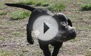 Training Programs - Colorado Gun Dogs